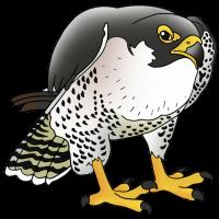 falcon-clipart-15